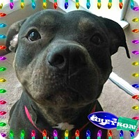 Adopt A Pet :: Greyson LOOK AT THAT SMILE! - Des Moines, IA