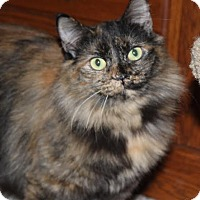 Adopt A Pet :: Autumn - Fairfax, VA