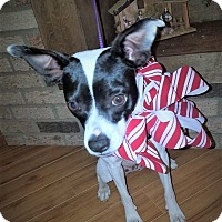 Adopt A Pet :: Marley ~ ADOPTED! - Brattleboro, VT