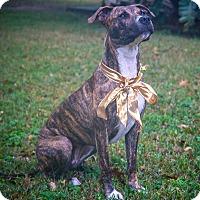 Adopt A Pet :: Jayda - Houston, TX