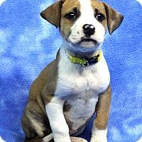 Adopt A Pet :: HILDA - Westminster, CO