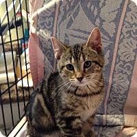 Adopt A Pet :: Milo - Berlin, CT