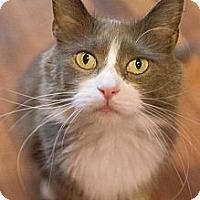 Adopt A Pet :: Ginnifer - Byron Center, MI
