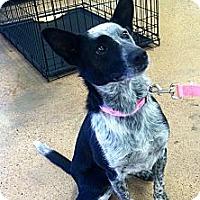 Adopt A Pet :: Indy - Phoenix, AZ
