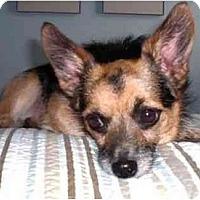 Adopt A Pet :: Mr. Pickles - Los Angeles, CA