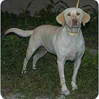 Adopt A Pet :: Moka - Cumming, GA