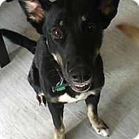 Adopt A Pet :: Maya - Saskatoon, SK
