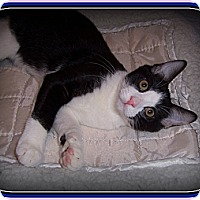 Adopt A Pet :: JoJo - South Plainfield, NJ