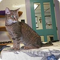 Adopt A Pet :: Fiona - Dover, OH