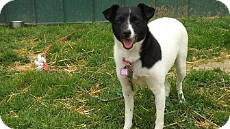 Chihuahua Mix Dog for adoption in Owenboro, Kentucky - GRETA