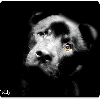 Adopt A Pet :: Teddy - Pascagoula, MS