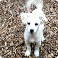 Adopt A Pet :: Angel - Bedford, TX