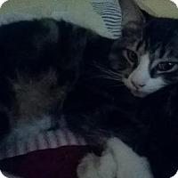 Adopt A Pet :: Bo - Columbus, OH