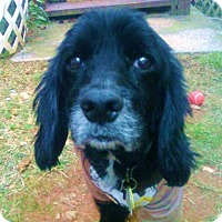 Adopt A Pet :: Graham - Alpharetta, GA