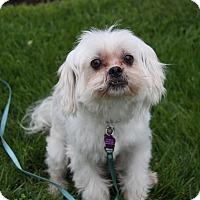 Adopt A Pet :: KEITH - Newport Beach, CA