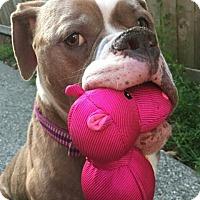 Adopt A Pet :: Faith - Seattle, WA