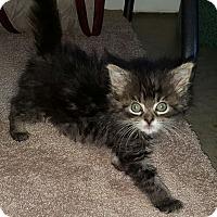 Adopt A Pet :: Mitzy - Irwin, PA