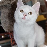 Adopt A Pet :: Dot - LaGrange, KY