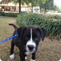 Adopt A Pet :: Champion - Nashville, TN