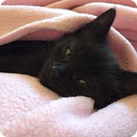 Adopt A Pet :: Raines - Divide, CO