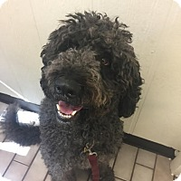 Adopt A Pet :: Daisy - Tulsa, OK
