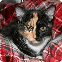 Adopt A Pet :: Ellie - Irving, TX