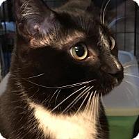 Adopt A Pet :: Deisel - Harrisburg, NC