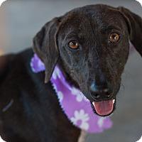 Adopt A Pet :: Carmen - Nanaimo, BC