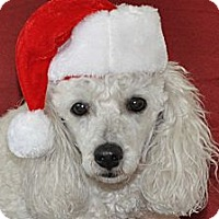 Adopt A Pet :: Fionna - Tumwater, WA