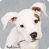 Adopt A Pet :: AVA - Brooksville, FL