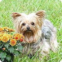 Adopt A Pet :: Wadlynn - Mocksville, NC