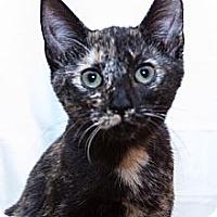 Adopt A Pet :: Kathleen - Irvine, CA