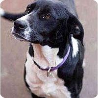 Adopt A Pet :: Mandy - Portland, OR