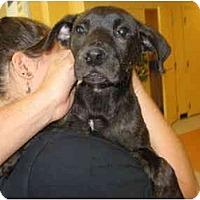 Adopt A Pet :: Taz - Reisterstown, MD