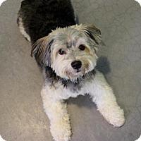 Adopt A Pet :: Roo - Atlanta, GA