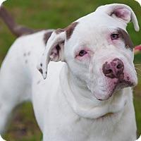 Adopt A Pet :: Rosie - Gainesville, FL