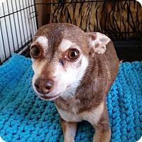 Adopt A Pet :: STORMEE - TAHOKA, TX