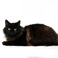 Adopt A Pet :: Hershey - Lufkin, TX