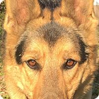 Adopt A Pet :: Tixta (Guest) - Roswell, GA