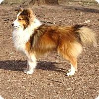Adopt A Pet :: P J - Mission, KS