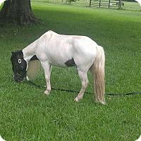 Adopt A Pet :: Apache - Baton Rouge, LA
