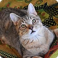 Adopt A Pet :: Jimmy - Bristol, CT