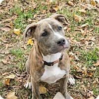 Adopt A Pet :: Glenda Fostered (Kristin) - Troy, IL