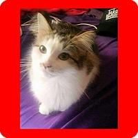 Adopt A Pet :: Pepper - Euless, TX