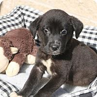 Adopt A Pet :: Stockton - Norwalk, CT
