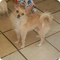 Adopt A Pet :: Bobo - West Valley, UT