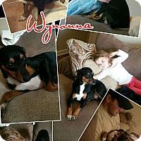 Adopt A Pet :: Wynonna-pending adoption - Manchester, CT