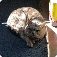 Adopt A Pet :: Beamer - Melbourne, FL