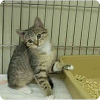 Adopt A Pet :: Alice - Mission, BC