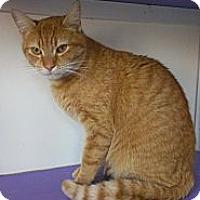 Adopt A Pet :: Mickey Rourke - Richboro, PA